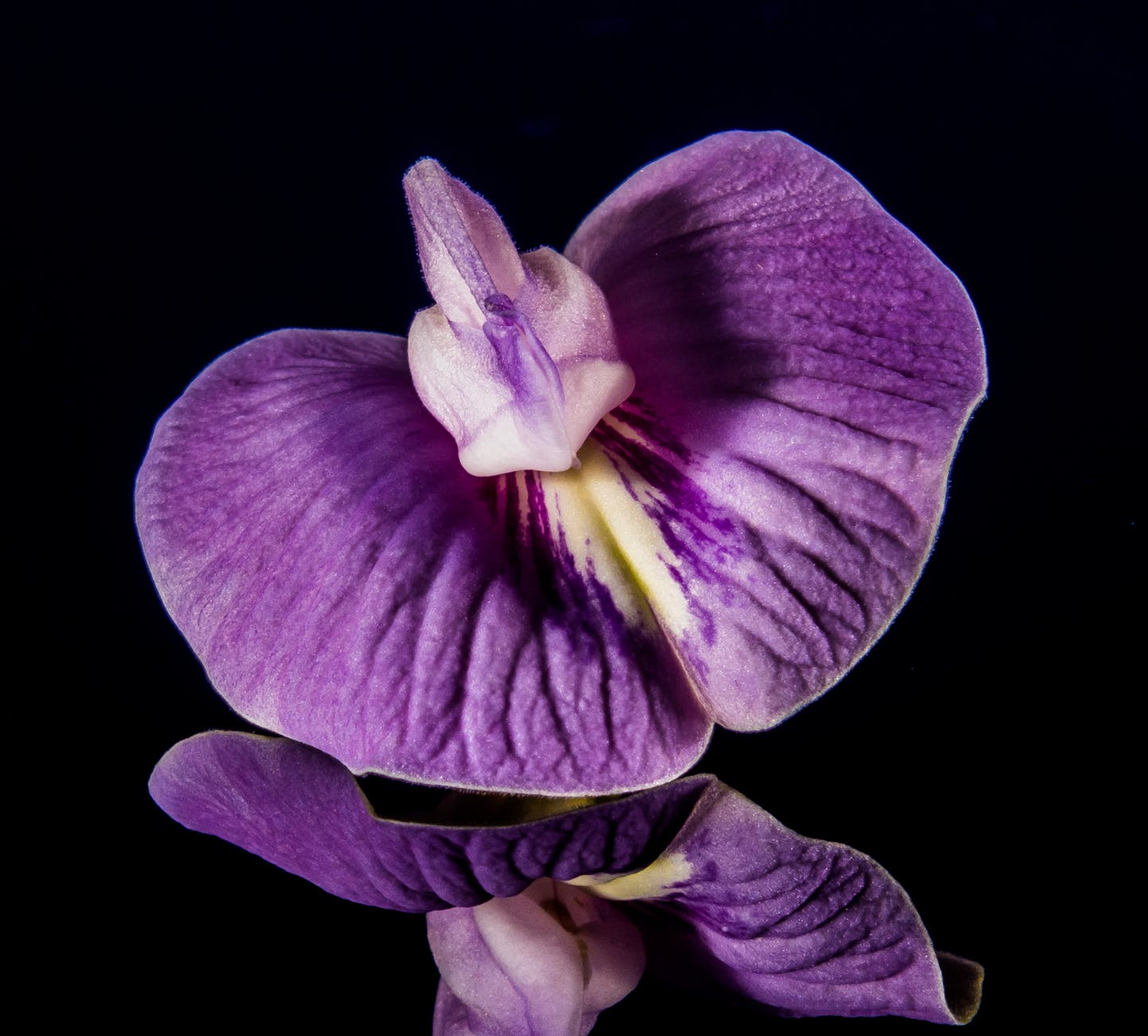 purple and white orchid in shallow focus lens